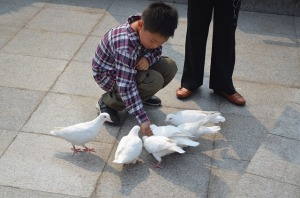 Boy feeding pigeon