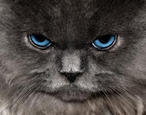 the-cat-1244985-m